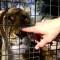 La Rioja: ¿Cómo será el traslado de los animales del ex zoológico municipal?