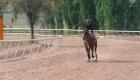 Pirque y sus 150 caballos de fuerza