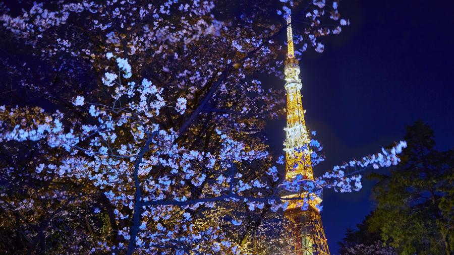 Temporada de flor de cerezo: el pronóstico anual de la flor de cerezo de la Asociación del Clima de Japón provoca una oleada de reservas nacionales e internacionales a medida que los viajeros corren para experimentar las famosas flores de Sakura del país.