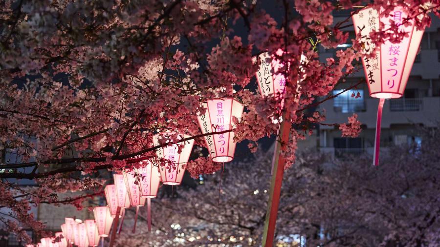 Río Meguro, Tokio: los cerezos que cuelgan sobre el río Meguro en el distrito Nakameguro de Tokio se suman a la belleza de la zona. Durante la temporada de flor de cerezo, los vendedores instalan puestos de comida, cerveza y champán rosado.