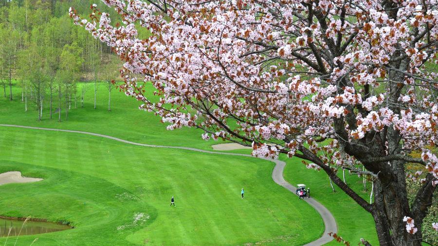 Niseko, Hokkaido: ¿Te apetece una ronda de golf bajo los cerezos en flor? Uno de los dos campos en Niseko Village fue diseñado por Arnold Palmer y tiene hileras de árboles de sakura a lo largo de las calles y en la entrada de la casa del club.