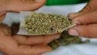 Partido de AMLO comienza proceso para regulación de la marihuana