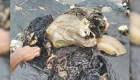 Hallan ballena muerta con 5,9 kilogramos de plástico en su estómago
