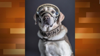 """Arau: """"Perros rescatistas en México son un símbolo de heroísmo"""""""