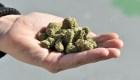 Exposición de cannabis en Sudáfrica... pero sin cannabis
