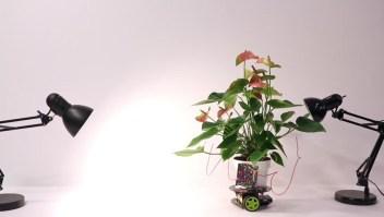 Elowan, la planta robot puede ser guiada hacía la luz