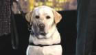 #LaImagenDelDía: El perro Sully vuelve a VetDogs