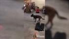 #EstoNoEsNoticia: divertida reacción de un perro con zapatos