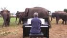 Pianista calma a elefantes con su música