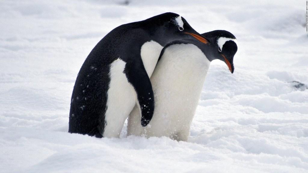 ¿Están llevando los humanos bacterias dañinas a la Antártida?