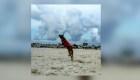 Piden ayuda para encontrar a perra rescatista en Cancún