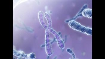 ¿Cómo se decodifica el ADN?