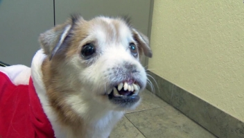 Perrito sin nariz se vuelve viral