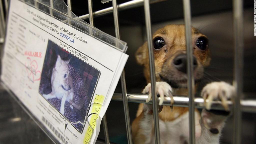 "California pone fin a ""las fábricas de cachorros"""