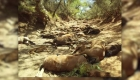 Caballos salvajes mueren en Australia por ola de calor