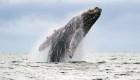 Drones ayudan a proteger ballenas