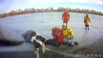 Rescatan a yegua de lago helado