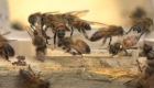 Las abejas, pequeñas e inteligentes