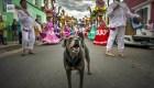 """""""Mazapán"""", el perro que corre maratones y baila en Oaxaca"""