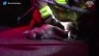 Dicky, el perro reanimado por los bomberos
