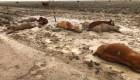 Las lluvias hacen estragos en el noreste de Australia