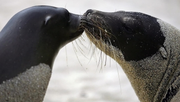 El Parque Nacional Galápagos celebra sus 6 décadas