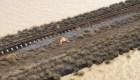 Australia: Cerca de medio millón de vacas mueren por inundaciones