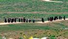 ISIS desaparece territorialmente, pero sus miembros aún son una amenaza