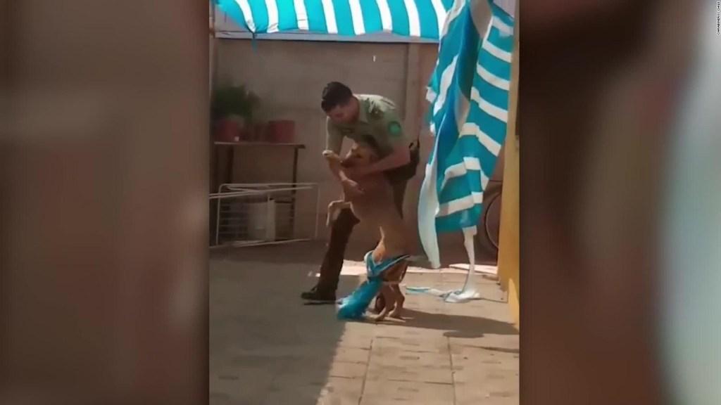 Perro en Chile, agradeció al policía que los rescató