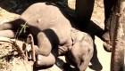 Tierno video de una mamá elefante y su bebé