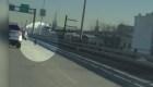 Las travesuras de un cordero en plena autopista en Brooklyn