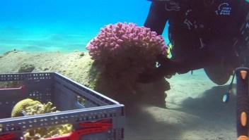 Protegen un ecosistema marino que estaba oculto en Israel