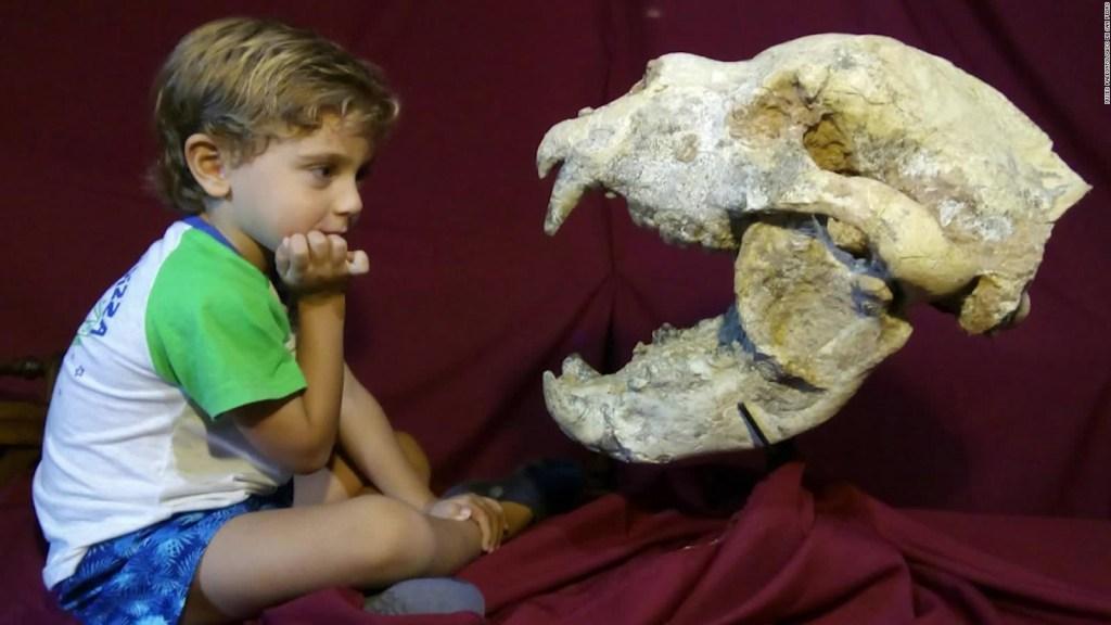 Hace 700.000 años vivió un oso gigante en Argentina