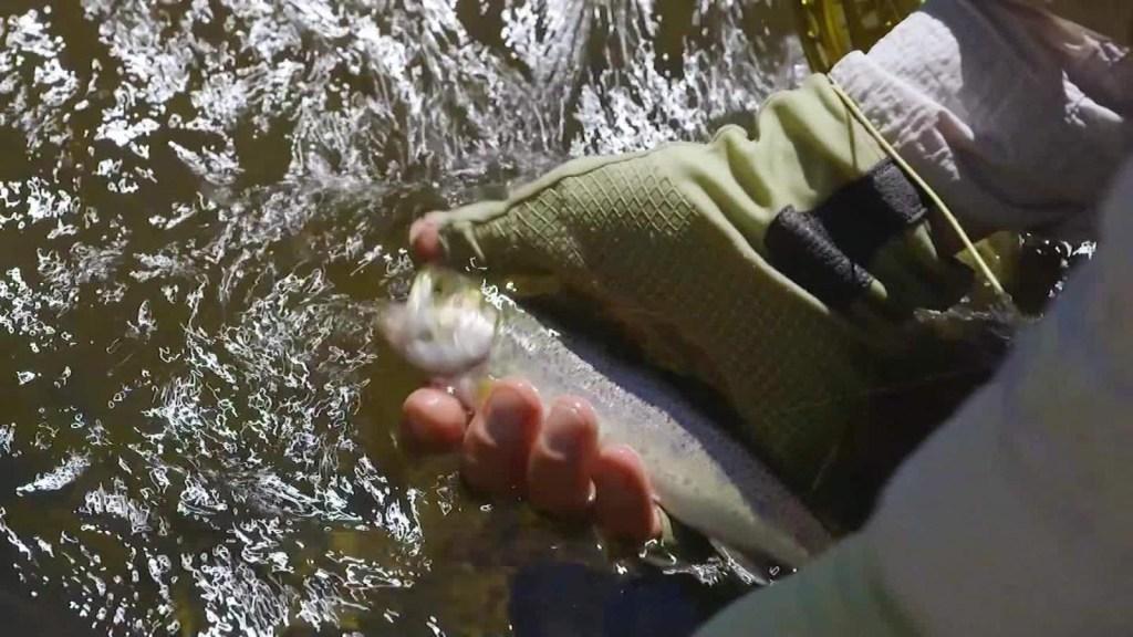 Los secretos de la pesca de trucha con mosca