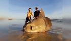 Pescadores son sorprendidos al toparse con gigante marino