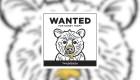Universidad busca al oso que lamió y robó colmenas de miel