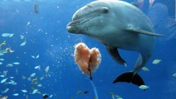 Delfines en riesgo por calentamiento oceánico