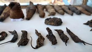 Descubren tumba en Egipto con animales momificados