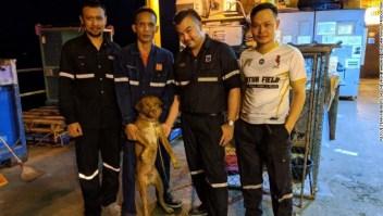 Perro, Tailandia