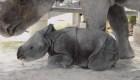 Este rinoceronte bebé hizo historia