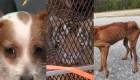 Animales víctimas de crueldad, tres rescates exitosos