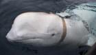 Sorpresa por una ballena con equipos del ejército ruso