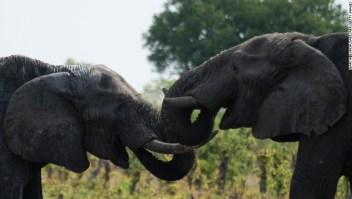 Elefantes, Zimbabue
