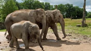 Zimbabwe vende elefantes para apoyar la conservación de la especie
