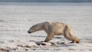 Un millón de especies podrían desaparecer