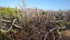 Los placeres del desierto de Baja California Sur en Destinos