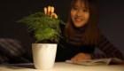 ¿Plantas con poderes digitales?