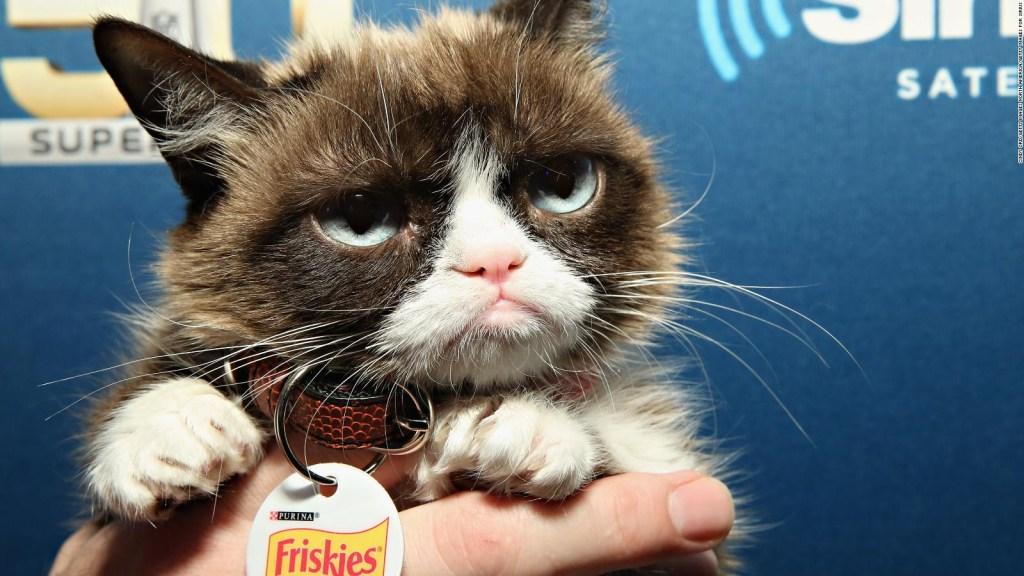 """""""Grumpy Cat"""", el famoso rostro malhumorado ha muerto"""