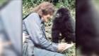 Muere el último gorila del estudio de Dian Fossey