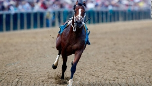 Bodexpress corre en la edición 144 del Preakness Stakes sin su jockey John Velázquez en el hipódromo de Pimlico, el sábado 18 de mayo de 2019, en Baltimore. War of Will, montado por Tyler Gaffalione ganó la carrera.